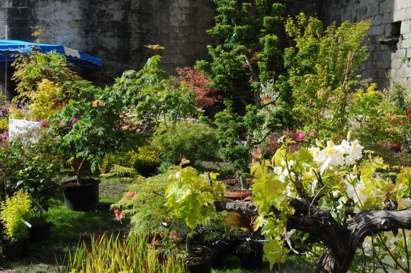 Vannes c t jardin 2014 for Jardi plus vannes