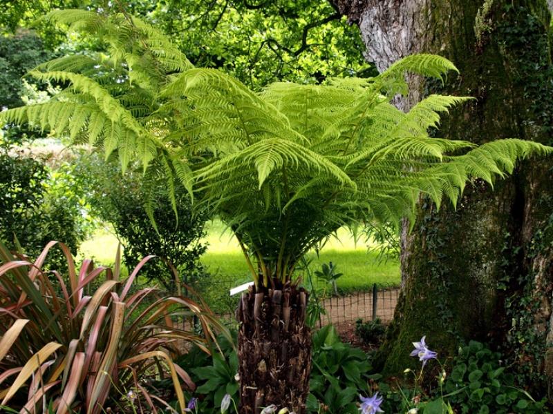 Fiche plante for Plante jungle